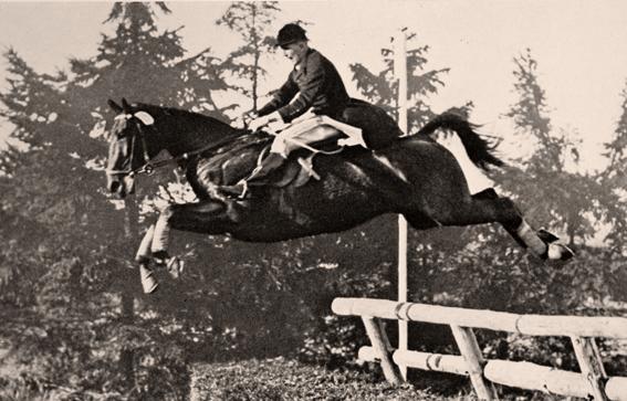 Hanko Pferd